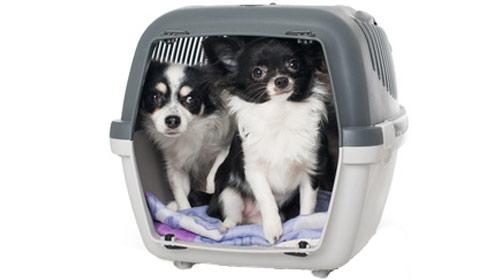 Kunststoff Hundeboxen